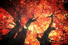 autunno è tempo di migrare