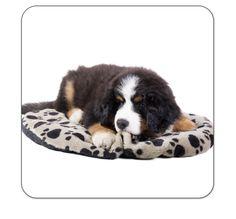 Untersetzer Bernersennenhund Slippers, Dogs, Coaster, Pet Dogs, Slipper, Doggies, Flip Flops, Sandal