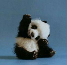 Süßer kleiner Babypanda