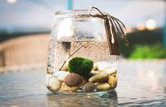 Amazon.com : Hinterland Trading Live Aquatic Marimo Moss Ball Plant Pet Glass Aquarium Kit : Patio, Lawn & Garden