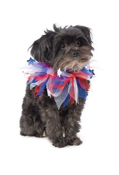 Red, White & Blue Patriotic Pet Collar - 3 Sizes  Let your all-American dog show their support for the USA with this fun patriotic dog collar. Perfect for any national holidays including Veteran's Day, President's Day, Memorial Day, voting day, and of course, the 4th of July!  Features red, white & blue ribbon collar with stars.  Available in Small/Medium, Medium/Large or Large/XL