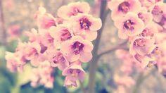 Pink Vintage Flower Photography<br>