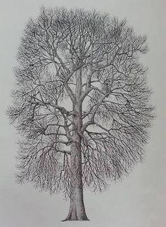Afbeeldingsresultaat voor ağaç çizimleri