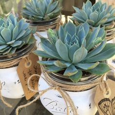 White Vintage Mason Jar w/ Succulent Kit // by SucculentCharm