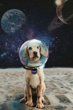 We have information that's about to blow your pet parent mind: You can turn your pet into a custom Sticker with PicsArt and add them to ANY photo. Picsart, Animals And Pets, Funny Animals, Cute Animals, Cute Creatures, Beautiful Creatures, Space Drawings, Dog Spaces, Tumblr