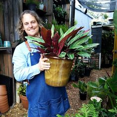 We're open today from 9 - 1 pm and we have these GORGEOUS extra-large Triostars (who can resist these? Indoor Garden, Indoor Plants, Houseplants, Canning, How To Make, Instagram, Inside Plants, Indoor House Plants, Home Canning