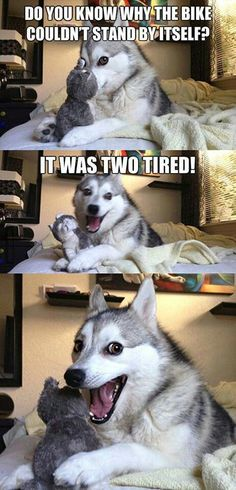 Husky telling jokes