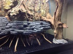 Been a reef keeper for many years, but decided I wanted to get into something different. Working on a 65 gallon paludarium. The sharp dropoffs on the Reptile Room, Reptile Cage, Reptile Enclosure, Baby Tortoise, Tortoise Care, Freshwater Aquarium, Aquarium Fish, Aquarium Garden, Aquarium Ideas