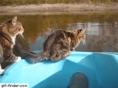 Cat tries to jump to the shore