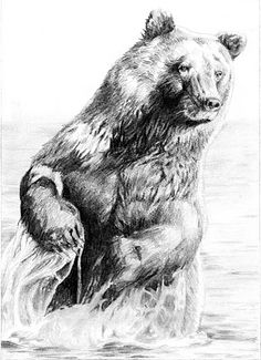 standing grizzly bear drawings realistic wwwpixshark