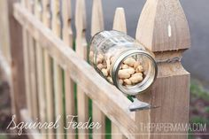 We feed the squirrels. Squirrel Feeder // thepapermama.com