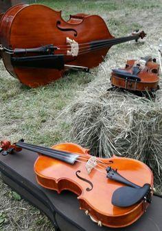 Viola e violino di Enrico Salvetti