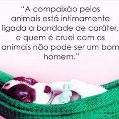 EXATAMENTE! ❤️ #amoanimais  #amocachorro  #amogato  #cachorro  #gato  #petmeupet  #maedepet  #amorincondicional