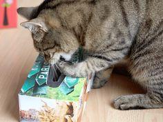 DIY Ideen für Katzenspielzeug, das man ganz einfach selber machen kann
