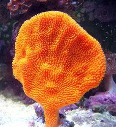 Saltwater Aquarium Live Sponges - Aquatic Connection