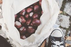 Make Laundry Detergent out of Chestnuts