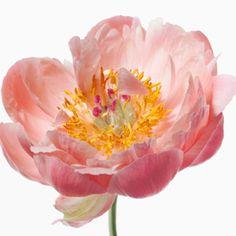 Paul Lange - Big Blooms
