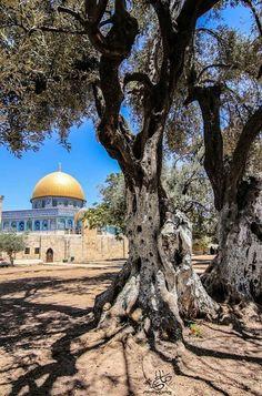 Masjid Umar (Doom of The Rock) Jerusalem Palestine Art, Palestine History, Islamic World, Islamic Art, Beautiful World, Beautiful Places, Muslim Religion, Dome Of The Rock, Beau Site