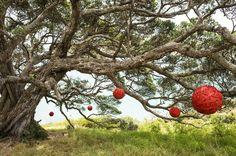 Wooden spheres of varying dimensions suspended from the branches of a Pohutakawa tree, evoking associations with Christmas decorations. Sculpture on the Gulf Waiheke Carson Life, David Carson Design, Waitangi Day, Waiheke Island, Outdoor Sculpture, Landscape Art, Beautiful Flowers, Sculptures, Christmas Decorations