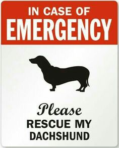 Most visited online store for Dog Rescue Stickers. Pick and place an order for your favorite Emergency Pet Stickers & Dachshund Dog Labels. Fast shipping in days. Rescue Dogs, Animal Rescue, Dachshund Art, Daschund, Dachshund Puppies, Piebald Dachshund, Funny Dachshund, Weenie Dogs, Doggies