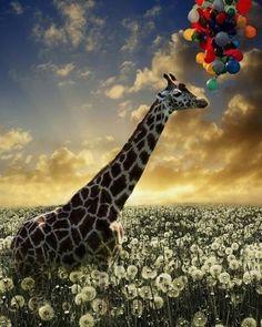 La plus grande preuve d'amour qu'on puisse donner à une girafe, c'est de lui tricoter un foulard.