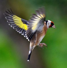 Bird Wall Art, Bird Artwork, Pretty Birds, Beautiful Birds, Nicolas Vanier, Canary Birds, Bird Gif, Super Cute Animals, Bird Sculpture