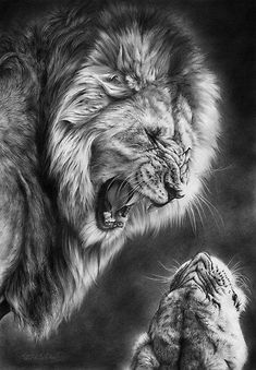 Heat of the night, lion and cub pencil drawing by Peter Williams.