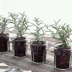 Easy and useful! Fresh herbs, repotted in glass jars, make a centerpiece you can use again, and again, at parties and in your cooking!