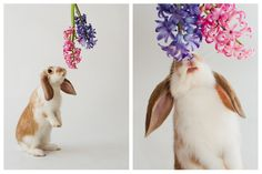 Happy first day of Spring! Note the carrot stained mouth. http://ift.tt/2n7aYX8