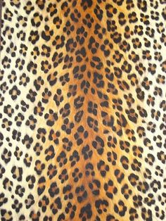 My favorite print!!!!! Anything and everything leopard :))