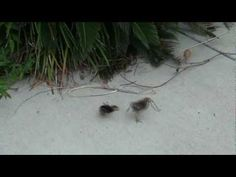 Hilarious! 3 chicks fight over a worm.  too funny!!!
