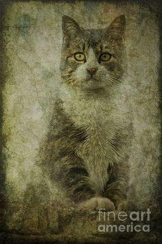 Title  Tomcat   Artist  Alice Van der Sluis   Medium  Photograph - Photography, Photography Based Digital Art
