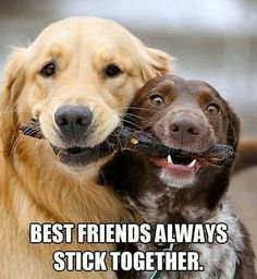 also best friends have the same stick too.  = = = http://pinterest.com/wittstephanie95/animals/
