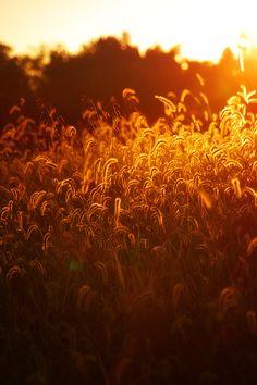 brillar una luz