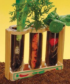 Budding biologists will love discovering how roots work with this illuminating and educational view of a typically hidden system. This kit contains everything needed to cultivate a love of plants in the inquisitive and curious.Includes wooden tube holder, three plastic tubes, growing medium and seeds6.5'' W x 8.28'' H x 3.63'' DRecommended for ages 8 years and upImported