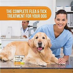 Dog Tick Medication