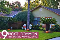 Trees, like any other living organism, can suffer from a myriad of diseases that affect their health. This guide will focus on the common tree defects and solutions you can use for the trees on your property. Southern House Plans, Country House Plans, Tree Lopping, Faire Son Compost, Rustic Country Homes, Tree Pruning, Build Your Dream Home, Cool Countries, Plantation