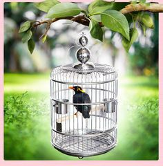 Large Vintage Bird Cage Stainless Steel Creative Bid Nest Ho… – Pets and Supplies Stainless Steel Bird Cage, Stainless Steel Types, House Photography, Vintage Birds, Background For Photography, Animal House, Pet Clothes, Pet Supplies, Your Pet