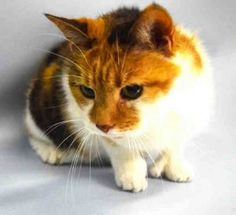 CAME IN WITH FELIZ A1098546 5 YRS OLD AND FRIENDLY