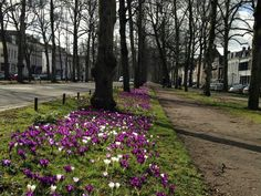 Utrecht  Maliebaan
