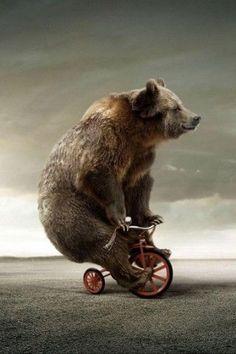 Bearcyclist