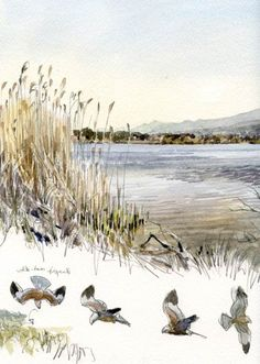 Corse, étang de Biguglia, soir du 27 mars 2012