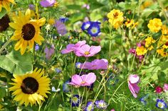 If you are thinking of growing your own little garden of wildflowers, you might consider investing in bulk wildflower seeds than live plants. Meadow Flowers, Lavender Flowers, Wild Flowers, Beautiful Flowers, Beautiful Gardens, Beautiful Things, Beautiful Pictures, Photos Free, Bulbs And Seeds