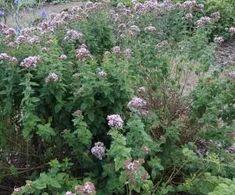 Korn, Detox, Plants, Aromatherapy, Planters, Plant, Planting