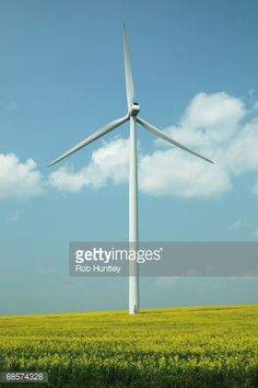 Stock Photo : Windmill and canola field. Electricity generating windmill in a blooming canola field in agricultural setting