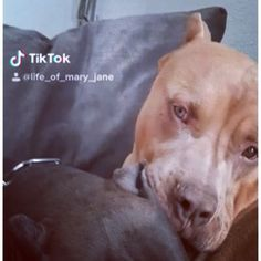 71 Likes, 5 Comments - Mary Jane French Kiss, Love Life, Couple Goals, Kisses, Puppy Love, Cannabis, Mary Janes, Pitbulls, Bae