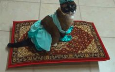 tastefullyoffensive:  Video: Princess Jasmine Cat Rides a Magic Flying Carpet