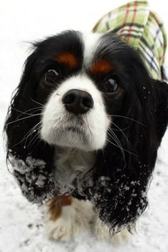 """We Did It!! 2nd Place """"Eyes"""" for Life + Dog Photo Contest. Miss Kodee those are some eyes"""
