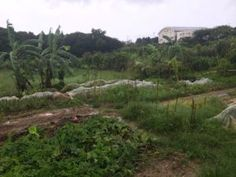 We Can See Clearly Now the Rain is Gone! Okinawa, Mother Nature, Weed, Harvest, Vineyard, Strength, Veggies, Rain, Organic