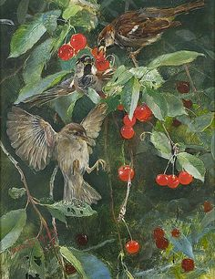 Sparrows In A Cherry Tree by Bruno Liljefors #art #painting #birds